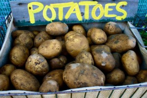 Potatoes; Photo by Rose Wall