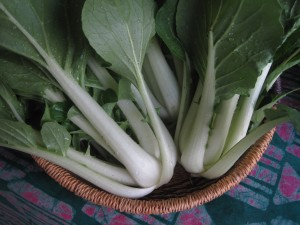 Bok Choy from the Hoophouse