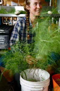 Liva cleaning fennel, photo by Rose Wall
