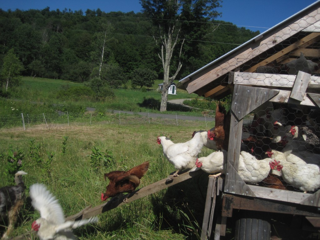 Hens embracing change