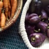 purple peppers and carrots at farmstand