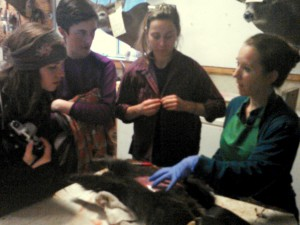 williams students at Mountain Deer Taxidermy