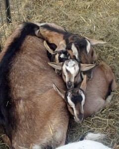 Jenga snuggled with her triplets - Hays, Maleski & Breen