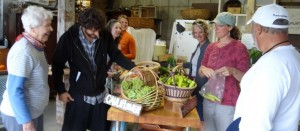 shopping in the farmstand