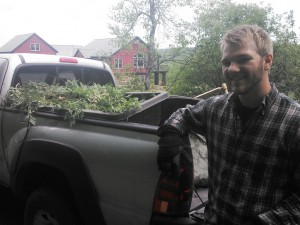 Connor with one of many truckloads of Chervil