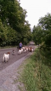 moving goats