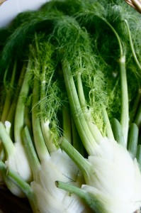 Fennel by Rose Wall