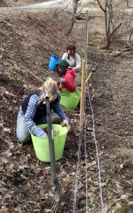 Grace, Soliz & Darienne digging chervil from pasture edge