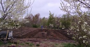 11-prepping onion beds