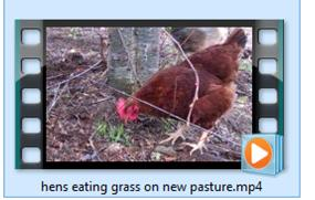 image for hen on pasture video