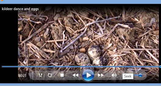 image for killdeer video