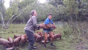 catching piglets for bread and butter
