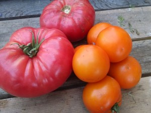 brandywine and jaune flamme tomatoes