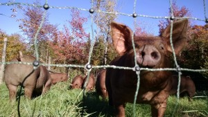 piglets and foliage