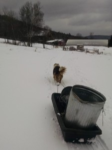 uno pulling sled