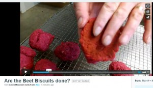 beet biscuit tapping are they done video