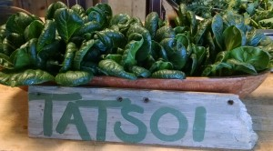 tatsoi greens with sign in farmstand