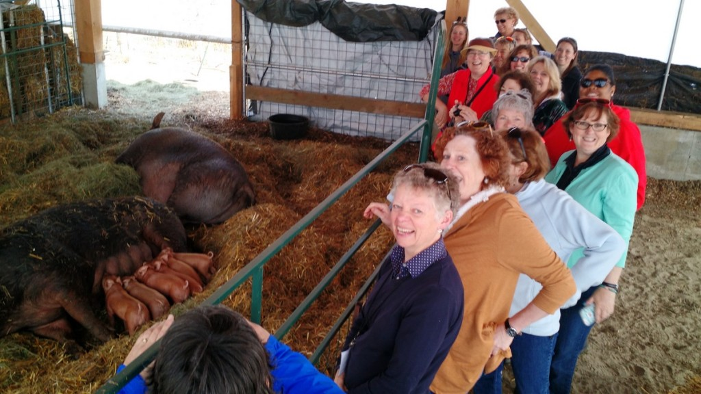 teachers visit with pigs