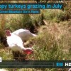 happy turkeys grazing vimeo screen shot