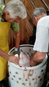 turkey-processing-mark-darryl-at-plucker