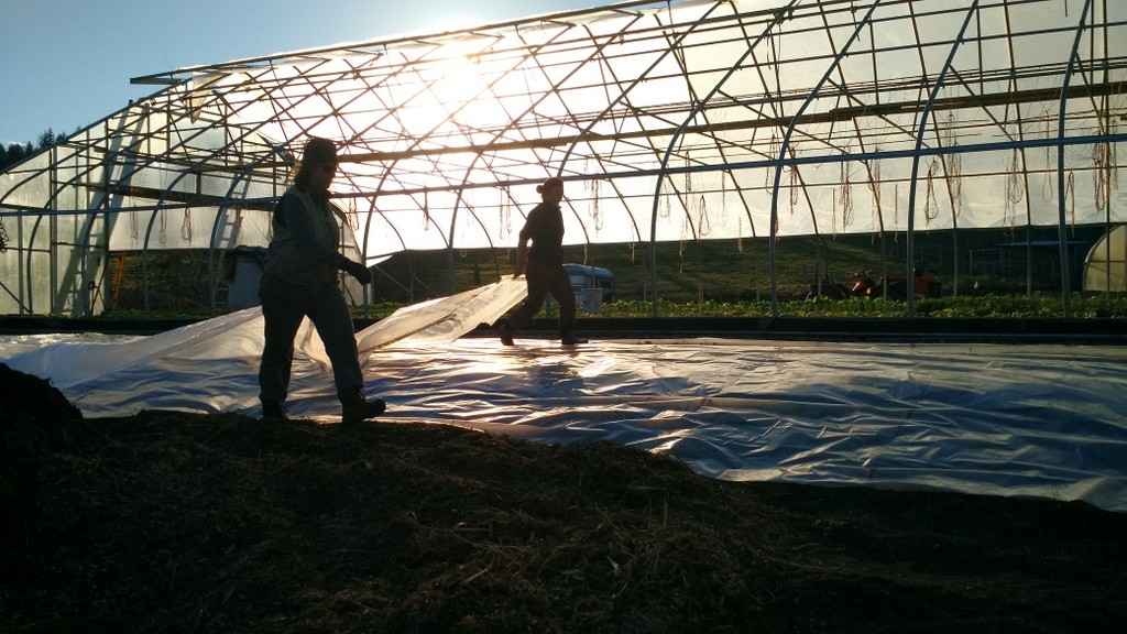 hoophouse-prep-folding-plastic-as-sun-goes-down-laura-darienne-staff