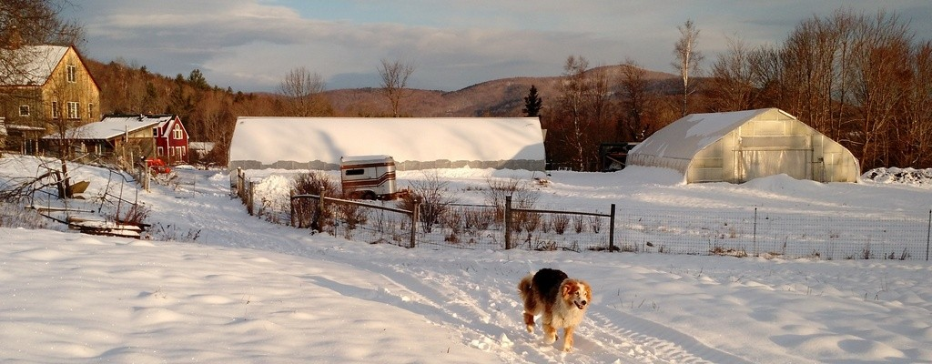 snowy-winter-farm-hoophouse