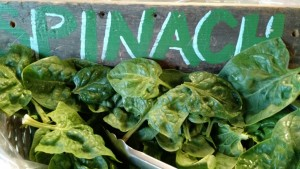 march spinach farmstand greens